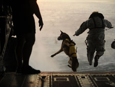Special Forces dog and soldier in parachute training