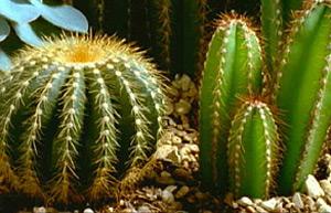 BBC - Gardening - Gardening Gu...