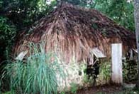 Photograph showing a slave hut in Barbados