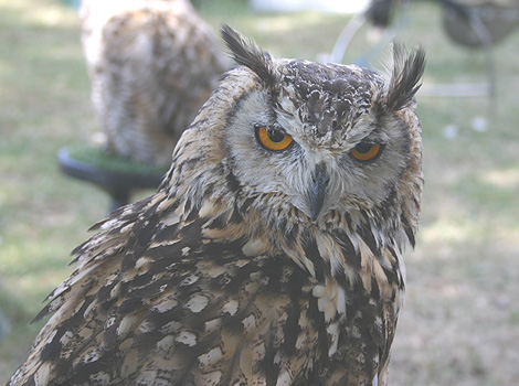 Wise old owl dating