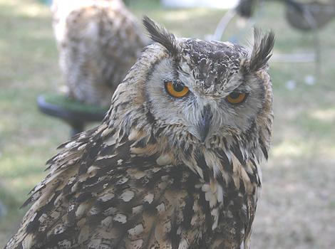 Grammar owl