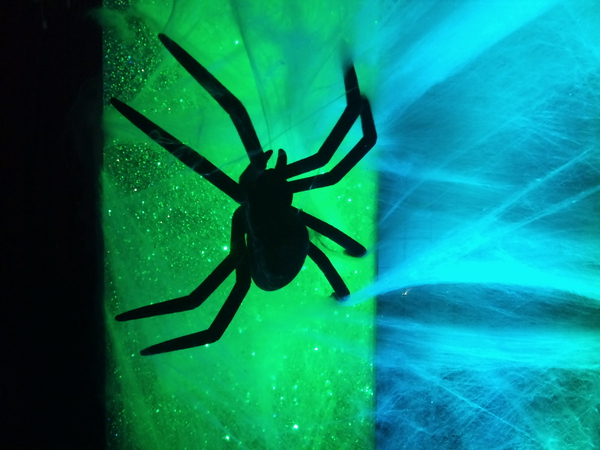 A scary spider from the Strictly Halloween special