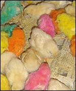 Coloured chicks