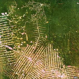 Aerial view of logging roads into Amazon forest