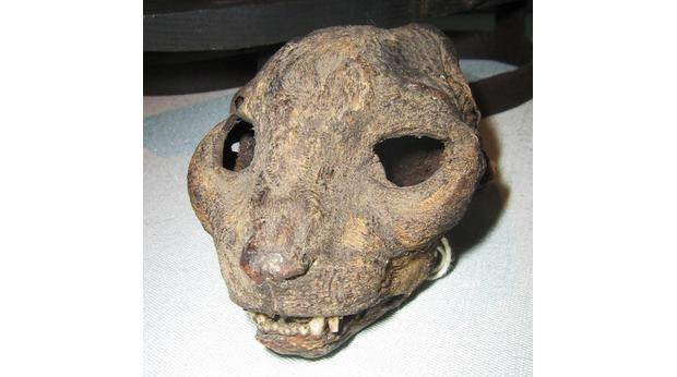 Mummified Cat's Head