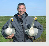 Brett Westwood with two Bewick's swans