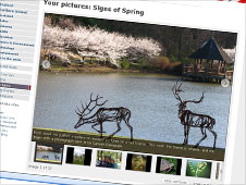 Your pictures of spring