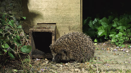Hedgehog home for the winter