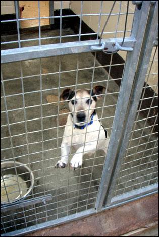 City Dogs Home Werrington Stoke On Trent