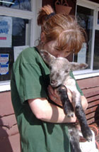 Dog Rescue Centres In Herts Beds And Bucks