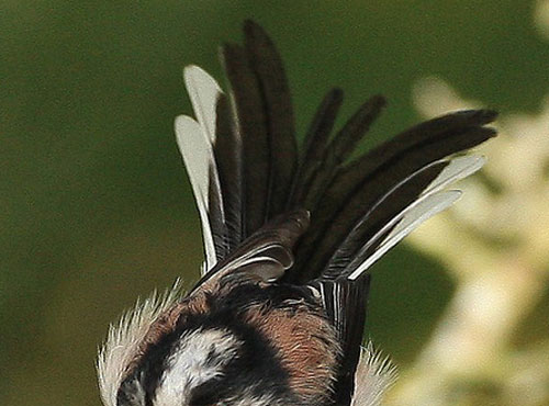 Quiz question 5 fluffed up feathers