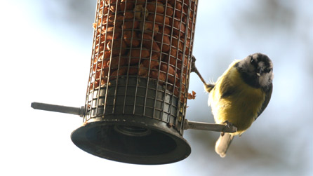 Bbc breathing places feed birds for Whole coconut bird feeders