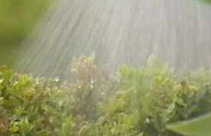 Wet weather can be a problem for gardeners