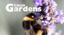 Your Gardens