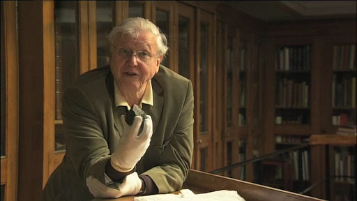 Video of Sir David Attenborough talking about this object
