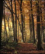 Autumn woodland (Photo: Nick Spurling)