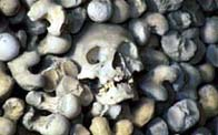 Photograph showing a single skeletons head amoungest sea shore pebbles