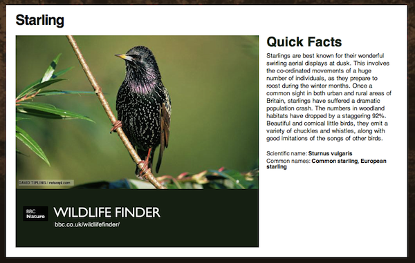Starling information from the BBC Wildlife Finder