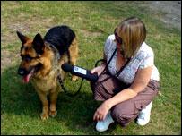 Dog Walking Leeds Volunteer