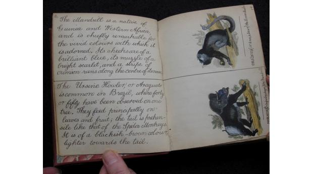 Book of hand painted illustrations