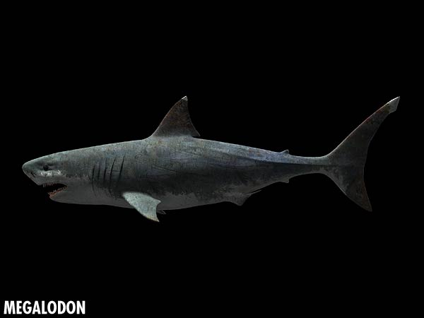 Sea Monsters Megalodon BBC - Science & Na...