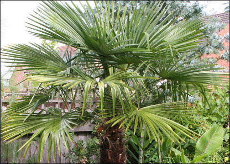 Bbc Liverpool In Pictures Tropical Knotty Ash