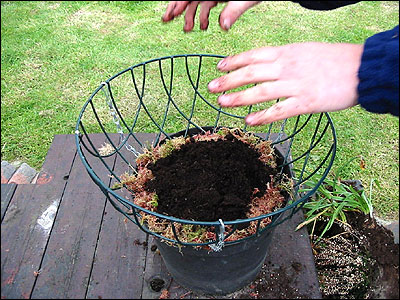 Step by step guide to making a hanging basket