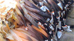 Goose barnacles by aligail1 on Flickr
