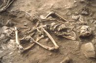 Photo of a skeleton from the Anglesey dig