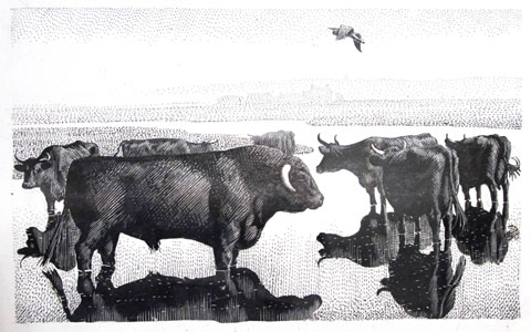 Charles Tunnicliffe's monochrome illustration of Welsh black cattle at Bont Farm
