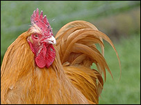 BBC - Leicester - People - Chicken Poo Shooter