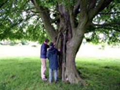 Brett Westwood and Jill Butler Aerial Roots - Hatfield Forest. © Ted Green (Ancient Tree Forum)