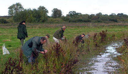 Fen raft spider reintroduction project