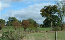 View across field in Newbury