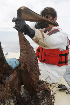 case study oil spill in gulf of mexico