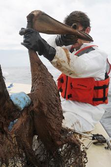 The BP Deepwater Horizon Oil Spill 2010