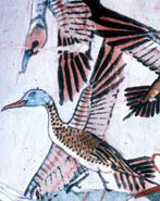 Tomb painting showing birds being hunted