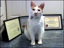 George the cat with his certificates