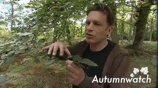 Abscission – Why do plants shed their leaves in autumn?