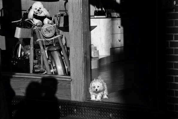A toy dog sits atop a wooden motorcycle as a real dog stands in doorway of a store in New York