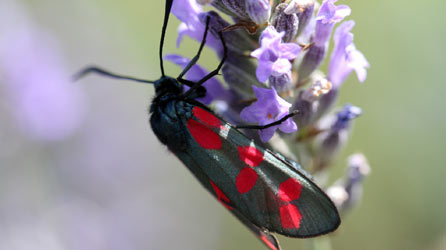 Bbc Breathing Places Plant For Moths