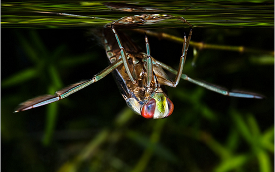 Water boatman by Duncan Cooke