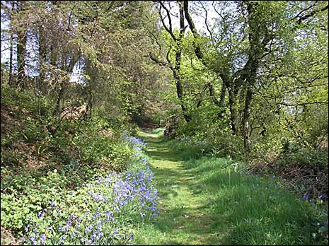 A path near Broadhembury
