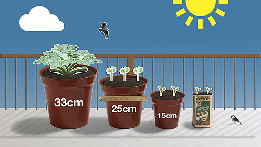 Bbc Dig In How To Grow Your Veg On A Balcony