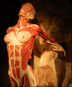 Bbc Manchester Science Body Worlds 4 In Pictures