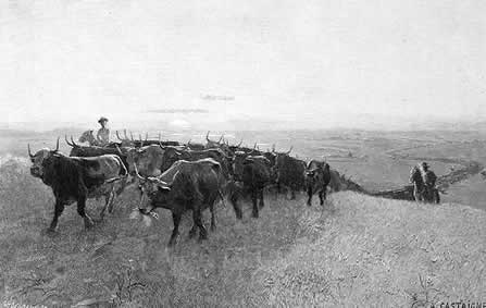 How do you make $ on ranching?