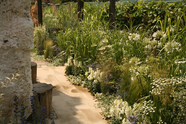 Sandstone paving representing the beach is softened by planting of white Antirrhinum, Stachys and the frothy heads of Ammi majus