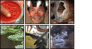 Mosaic of flickR images of the Amazon