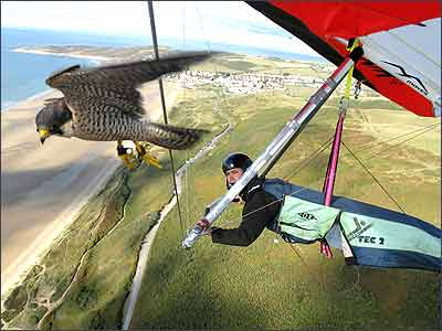 flying with pet falcon