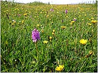 Machair on Coll c/o Tony Oliver